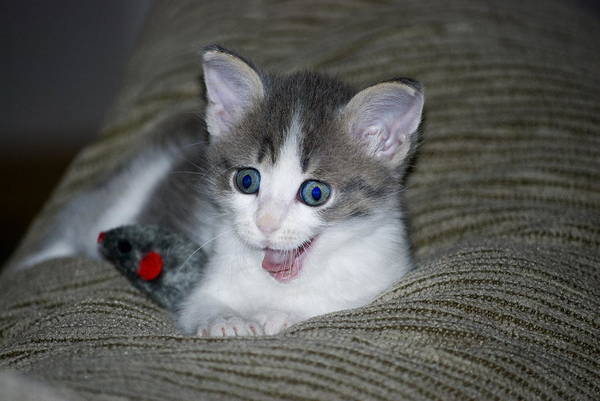 Wall Art - Photograph - Smiling Kitty by Thomas Woolworth