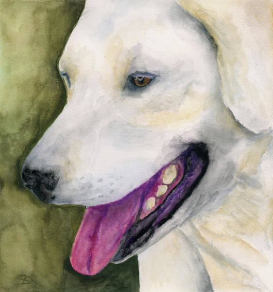 Wall Art - Painting - Smiling Lab by Stephen Anderson