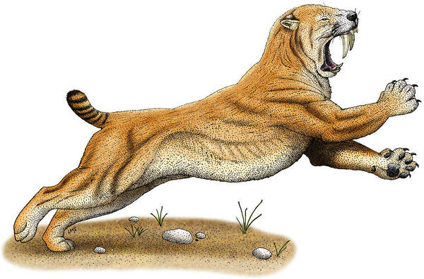 Smilodon Wall Art - Photograph - Smilodon Saber-toothed Tiger by Roger Hall