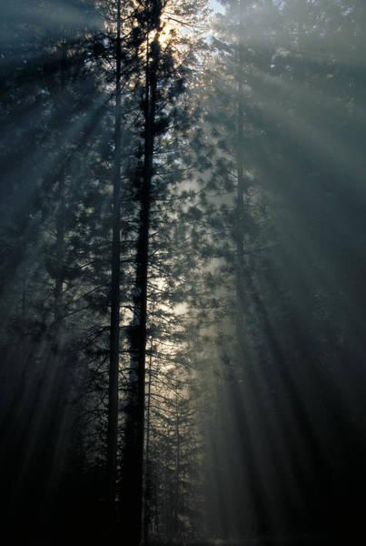 Wall Art - Photograph - Smoke Amongst Trees by Brenda Tharp