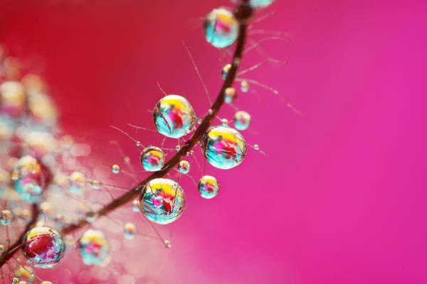 Wall Art - Photograph - Smoking Pink Drops by Sharon Johnstone