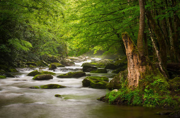 Moss Green Photograph - Smoky Mountains Solitude - Great Smoky Mountains National Park by Dave Allen