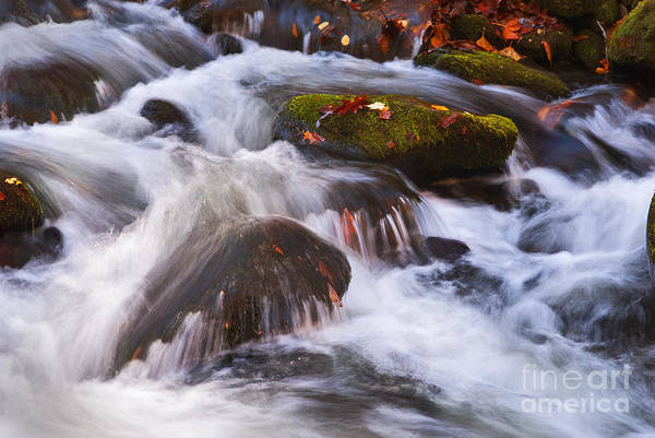Photograph - Smoky Mtn Stream - 429 by Paul W Faust -  Impressions of Light