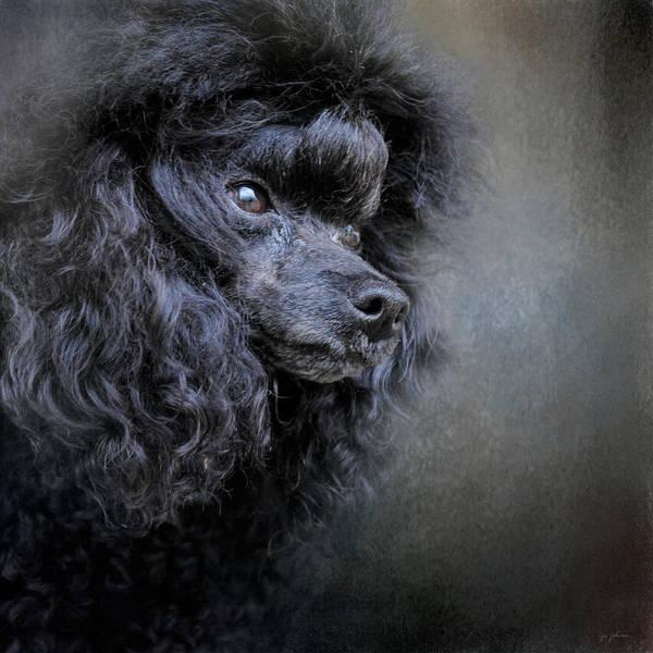 Photograph - Snack Spotter - Black Toy Poodle by Jai Johnson