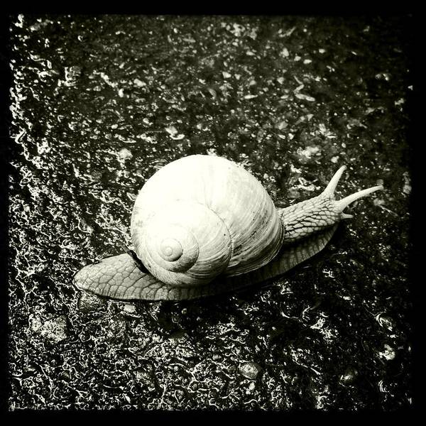 Black And White Photograph - Snail Black And White by Matthias Hauser