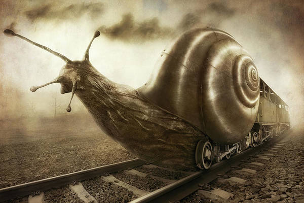 Funny Wall Art - Photograph - Snail Mail by Christophe Kiciak