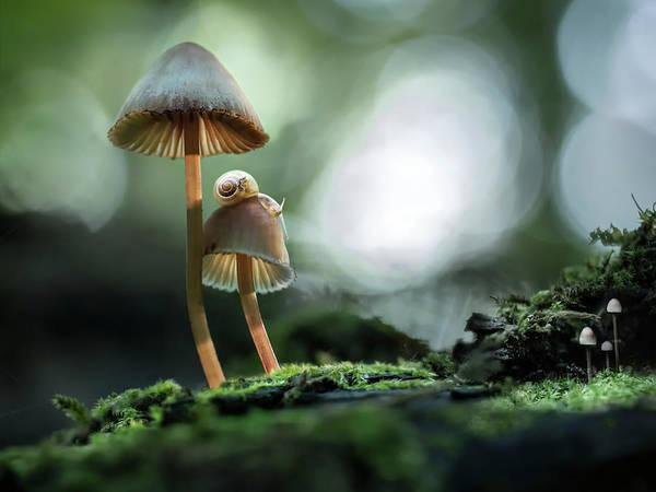 Photograph - Snails Atop Mushrooms by Photo By Marianna Armata