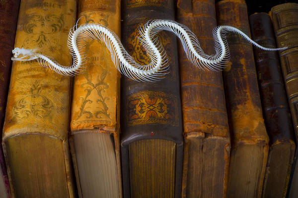 Serpent Photograph - Snake And Antique Books by Garry Gay