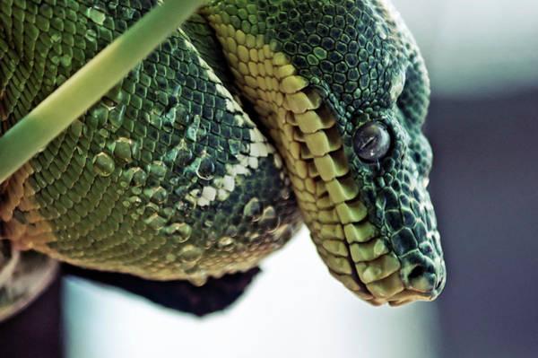 Wall Art - Photograph - Snake Eye by Craig Thomas