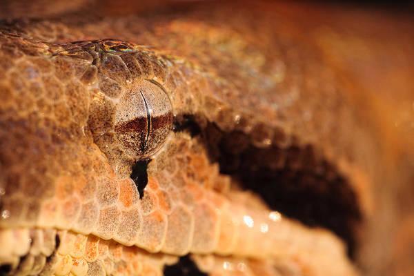 Photograph - Snake Eye by Jeff Sinon