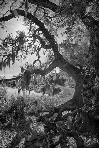 Cedar Key Photograph - Snake Key Mossy Oak by Jurgen Lorenzen