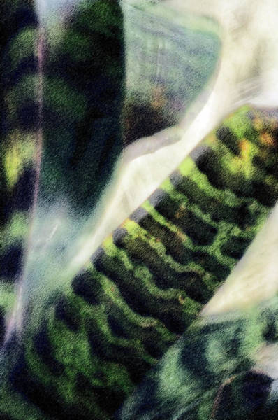 In Law Photograph - Snake Plant (sansevieria Trifasciata) by Maria Mosolova/science Photo Library