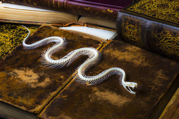 Serpent Photograph - Snake Skeleton And Old Books by Garry Gay