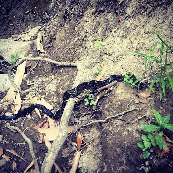 Reptiles Wall Art - Photograph - #snake #whiteriver With #mydogdaisy by Melissa Wyatt
