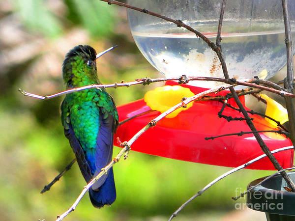 Sneak Photograph - Sneaking Up On An Irazu Hummingbird by Al Bourassa