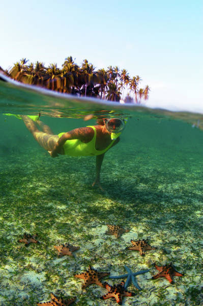 Snorkeling Photograph - Snorkeller Swimming Above Starfish In by Tim Rock/lonely Planet-getty Images
