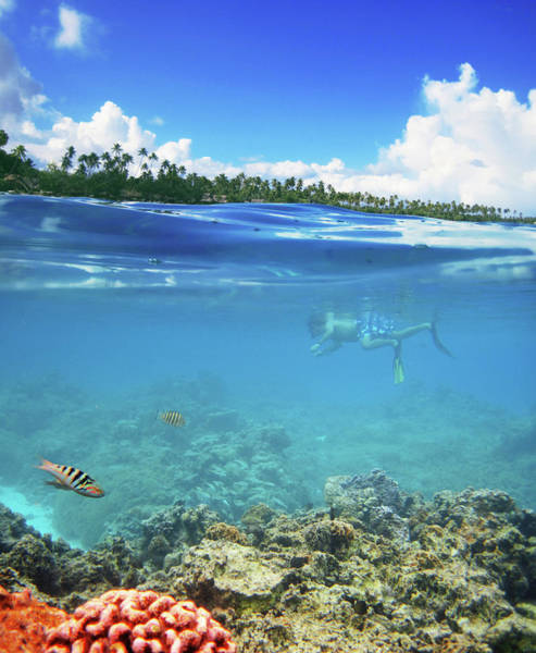 Snorkeling Photograph - Snorkling In Bora Bora by Samantha T. Photography