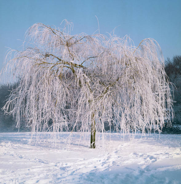 Hoar Photograph - Snow And Hoar Frost. by Anthony Cooper/science Photo Library