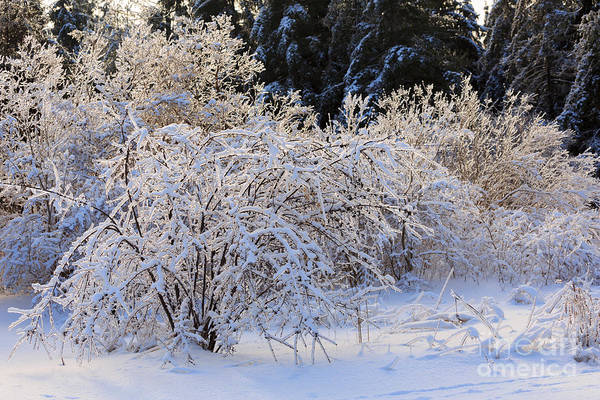 Southern Ontario Photograph - Snow And Ice by Louise Heusinkveld