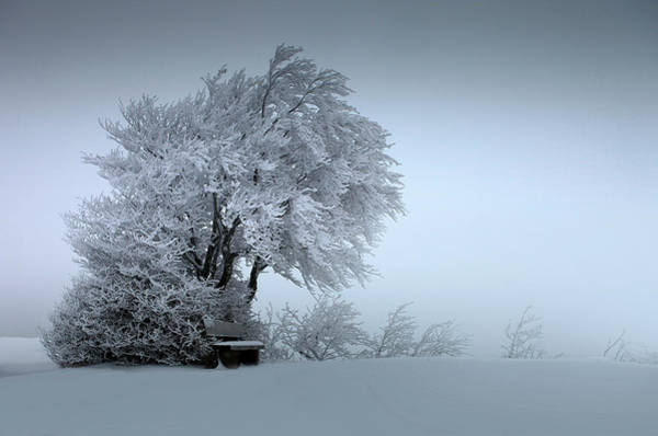 Wall Art - Photograph - Snow Bank by Nicolas Schumacher
