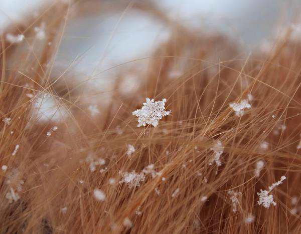 Photograph - Snow Beauty by Candice Trimble