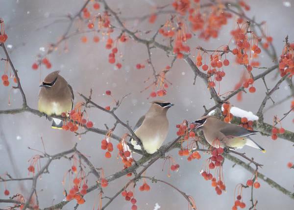 Wall Art - Photograph - Snow, Bird And Tree by Ben Li