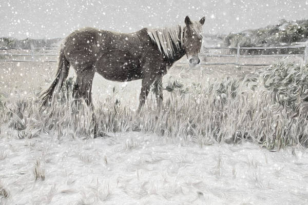 Photograph - Snow By The Beach by Alice Gipson