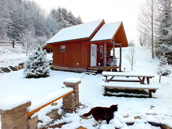Photograph - Snow Cabin Campsite With Cat by Duane McCullough