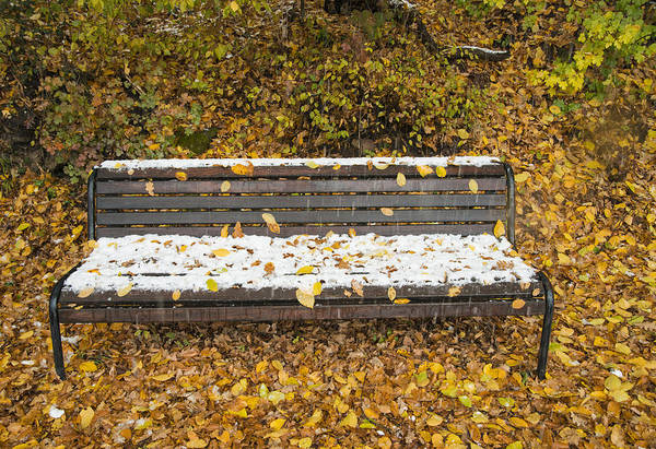 Photograph - Snow Covered Bench In Fall by Matthias Hauser