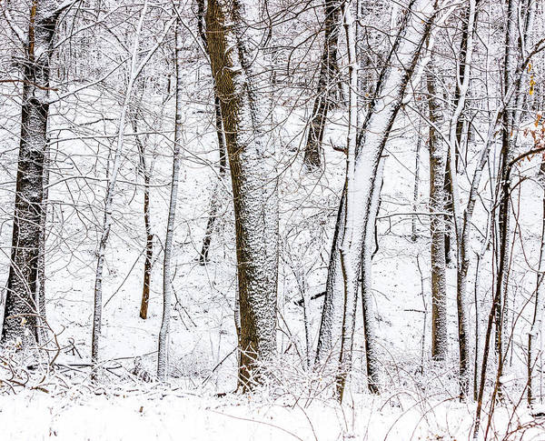 Photograph - Snow Covered Forest 5 by Pete Hendley