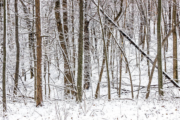Photograph - Snow Covered Forest #6 by Pete Hendley