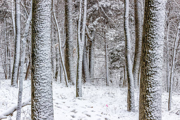 Photograph - Snow Covered Forest by Pete Hendley