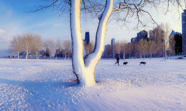 Animal Place Photograph - Snow Covered Lakefront Park In Winter by Panoramic Images