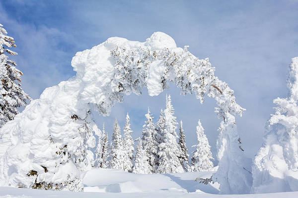 Pine Tree Photograph - Snow Covered Pines by Kencanning