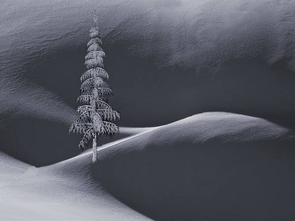 Digital Art - Snow Covered Tree And Mountains Bw by David Dehner