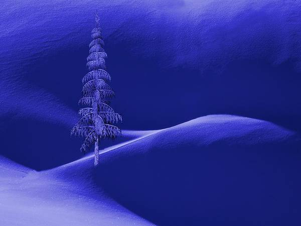 Dehner Digital Art - Snow Covered Tree And Mountains Night by David Dehner