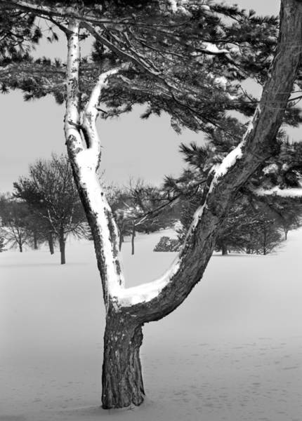 Photograph - Snow Covered Tree In Winter by Randall Nyhof