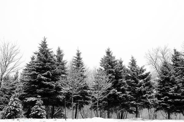 Covering Photograph - Snow Covered Trees by Gail Shotlander