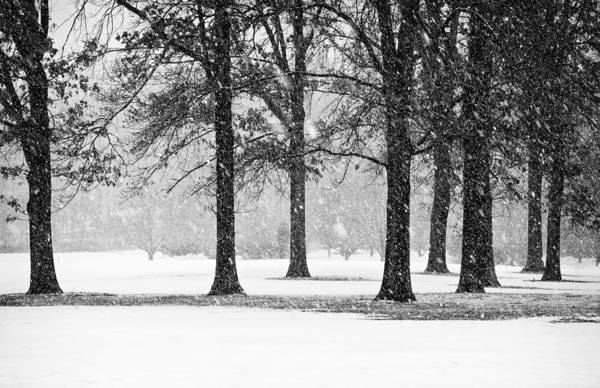 Photograph - Snow Day At The Park by Gary Slawsky