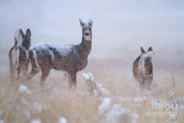 Photograph - Snow Day by Jim Garrison