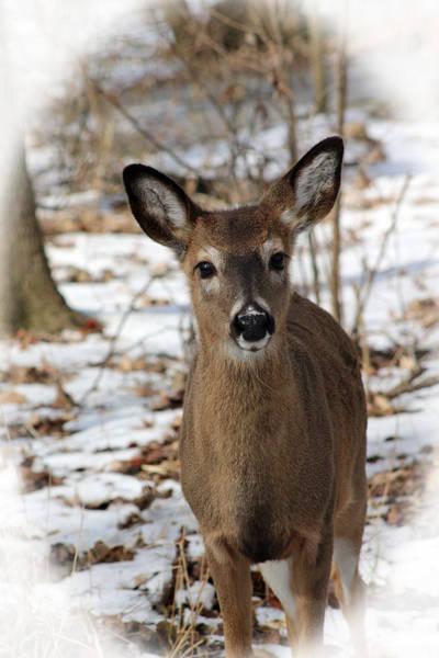 Photograph - Snow Deer by Lorna R Mills DBA  Lorna Rogers Photography