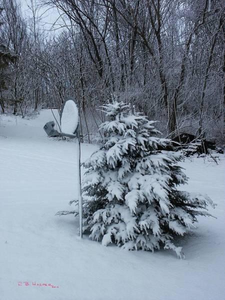 Photograph - Snow Dish II by R B Harper