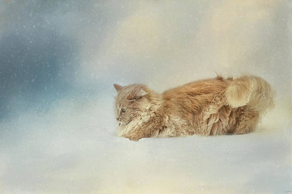 Orange Tabby Photograph - Snow Diving by Jai Johnson