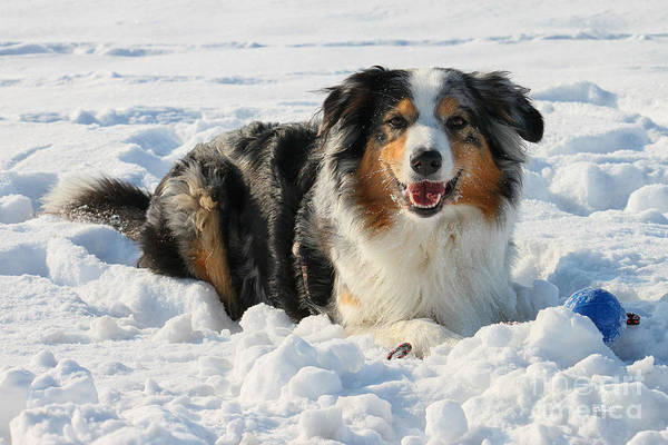 Eye Ball Photograph - Snow Dog by Jutta Maria Pusl