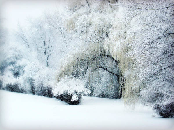 Weeping Willow Wall Art - Photograph - Snow Dream by Julie Palencia