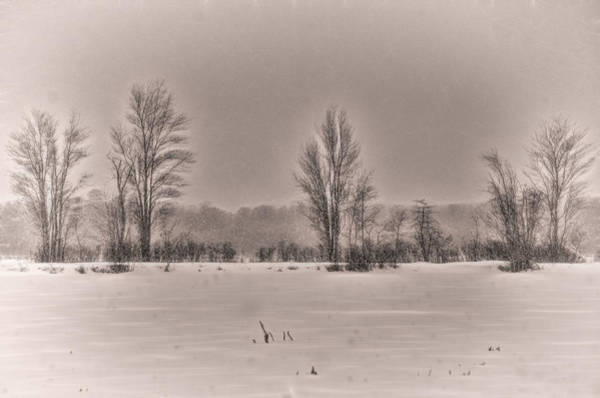 Photograph - Snow Falling On Bare Trees 2 by Beth Sawickie