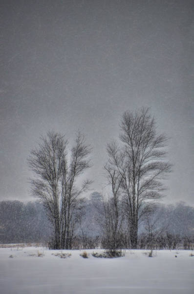 Photograph - Snow Falling On Bare Trees by Beth Sawickie