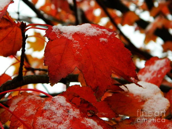 Photograph - Snow Falls by Andrea Anderegg