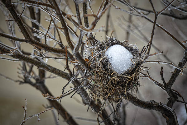 Empty Nest Wall Art - Photograph - Snow Filled Nest by Julie Palencia