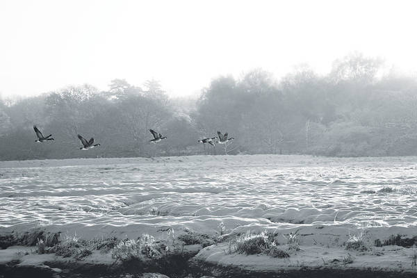 Snow And Geese Art Print
